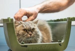 veterinario-gatos (1)