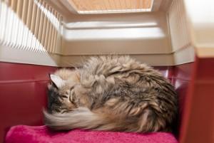 Feliway-Gato-descansando-en-transportín